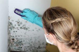 Comment traiter des champignons sur les murs humides ?
