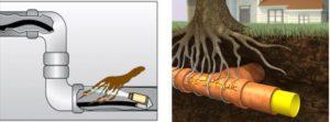 Obstruction de racine d'arbre dans vos tuyaux