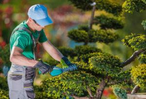 Pourquoi faire appel à un jardinier paysagiste ?